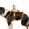 Dog Harness - On Dog
