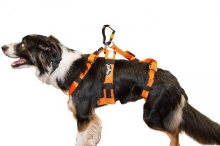 Dog Harness - On Dog